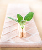 Fresh sage leaves with wood pin on ceramic tile Royalty Free Stock Images