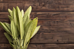 Fresh sage at left side of wooden table Royalty Free Stock Image