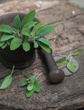 Fresh sage in a mortar Stock Photo