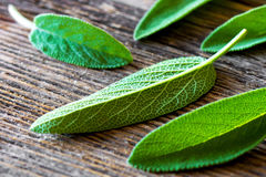 Fresh sage on an old wooden table Stock Image
