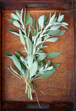 Fresh sage plant on wooden table Stock Photos