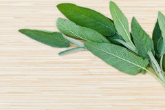 Fresh sage put on wooden board. Stock Photography