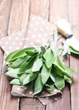 Fresh sage Stock Photography