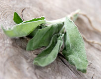 Fresh sage Royalty Free Stock Image