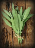 Fresh sage on wooden table Royalty Free Stock Image