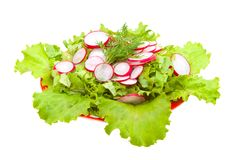 Fresh salad. Diet salad of radish and fresh lattuk with olive oil Stock Image