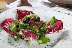 Fresh salad. A large white plate full of fresh lettuce salad royalty free stock photo