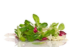Fresh salad with arugula Stock Photo