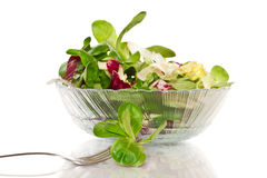 Fresh salad with arugula Royalty Free Stock Images