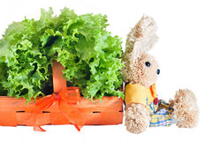 Fresh Salad Basket Royalty Free Stock Photography