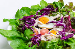 Fresh salad with boiled egg in a white plate Royalty Free Stock Image