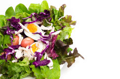 Fresh salad with boiled egg in a white plate Royalty Free Stock Photo