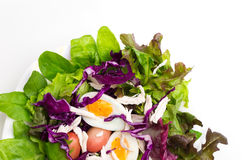 Fresh salad with boiled egg in a white plate Stock Image