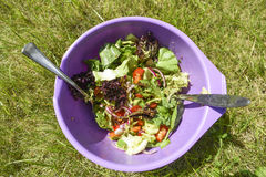 Fresh salad in a bowl in garden, summer time, healthy food. Stock Photo