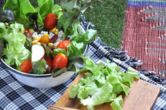 Fresh salad bowl on green grass Stock Images