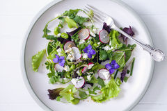 Fresh salad with broad beans, radish and violets Royalty Free Stock Image