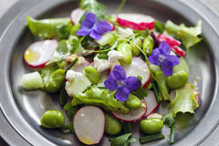 Fresh salad with broad beans, radish and violets Royalty Free Stock Images