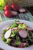 Fresh salad with cabbage and radish. Fresh vegetables salad with cabbage  and radish Stock Image