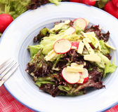 Fresh salad with cheese and radish Stock Photos