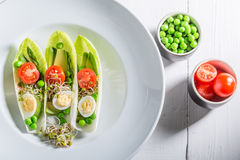 Fresh salad in chicory with egg, sprouts and avocado Royalty Free Stock Photo