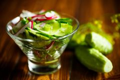 Fresh salad with cucumber and radish. On a wooden table Stock Photos