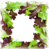 Fresh salad frame with water drops Stock Photography