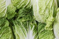 Fresh salad / fresh lettuce Stock Photo