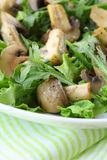 Fresh salad with  grilled mushrooms Royalty Free Stock Image