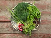 Fresh salad ingredients on a metal round tray. Healthy fresh salad ingredients on a metal round tray with several varieties of leafy green salad, dill and a royalty free stock photography