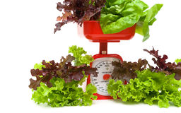 Fresh salad and kitchen scales close up on a white background Royalty Free Stock Photography