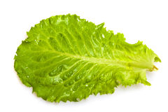 Fresh salad leaf Royalty Free Stock Photos