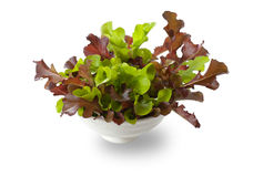 Fresh salad leafs. Isolated on white background stock images
