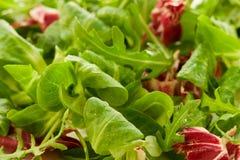 Fresh salad leaves Royalty Free Stock Image