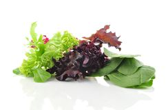 Fresh salad leaves Stock Photos