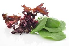 Fresh salad leaves. Mix isolated on white Royalty Free Stock Images