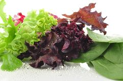 Fresh salad leaves Royalty Free Stock Photography