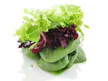 Fresh salad leaves Stock Photo