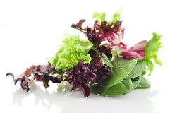 Fresh salad leaves Stock Images