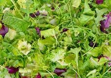 Fresh salad leaves assortment closeup Stock Photos