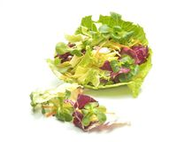 Fresh Salad Leaves Assortment Royalty Free Stock Image
