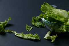 Fresh salad leaves in bowl stock image