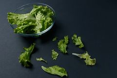 Fresh salad leaves in bowl royalty free stock images