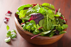 Fresh salad leaves in bowl: spinach, mangold, ruccola Royalty Free Stock Photos