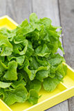 Fresh salad leaves in the garden Royalty Free Stock Images
