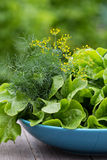 Fresh salad leaves in the garden Royalty Free Stock Photo