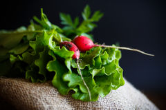 Fresh salad leaves with organic radish and herbs Stock Image
