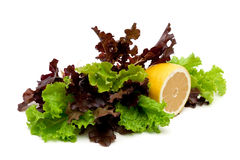 Fresh salad and lemon isolated on a white background Royalty Free Stock Images