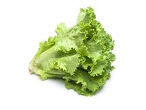Fresh salad lettuce Stock Images