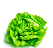 Fresh salad lettuce Stock Photography