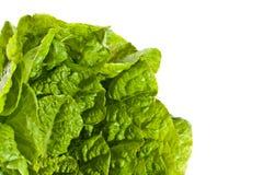 Fresh salad lettuce Stock Photos